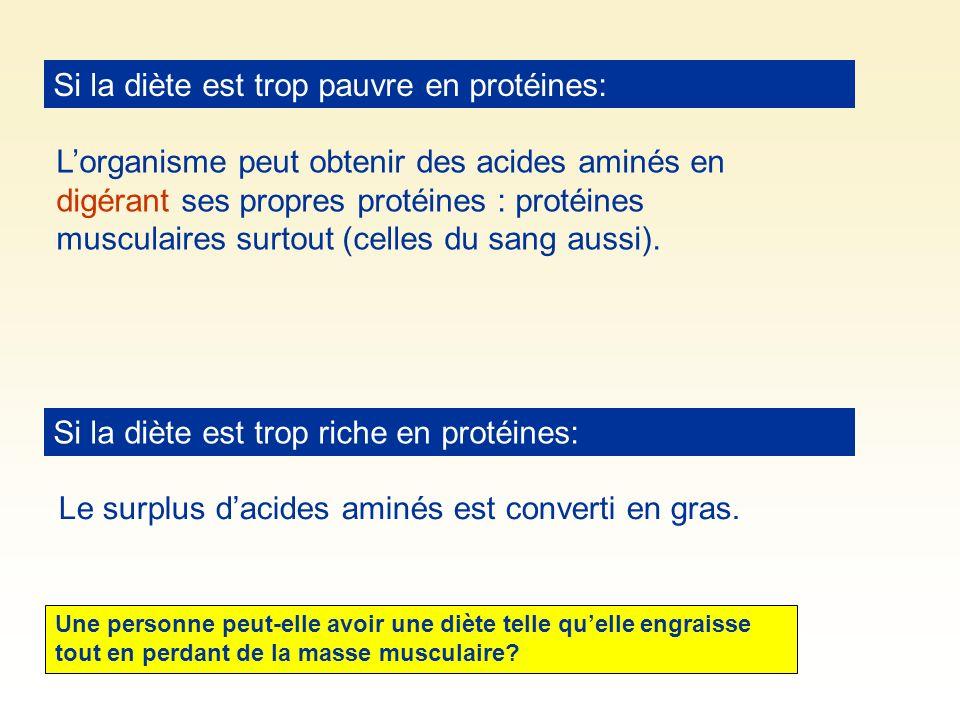 Si la diète est trop pauvre en protéines: