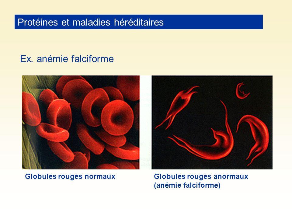 Protéines et maladies héréditaires