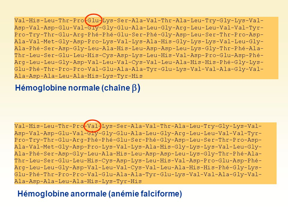 Hémoglobine normale (chaîne )
