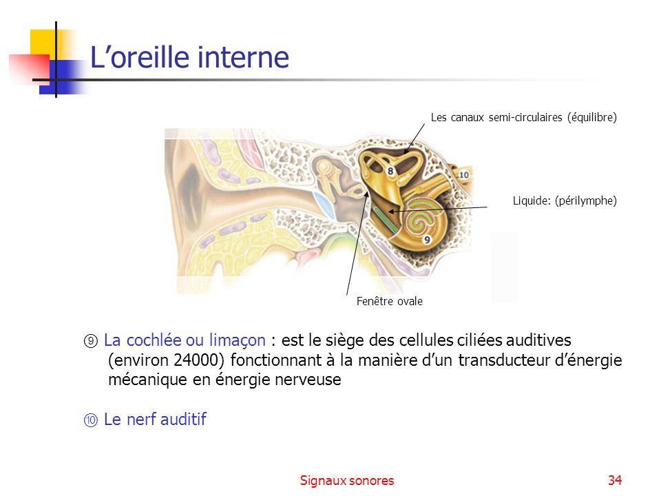 L'oreille interne Les canaux semi-circulaires (équilibre) Liquide: (périlymphe) Fenêtre ovale.