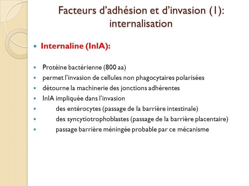 Facteurs d'adhésion et d'invasion (1): internalisation
