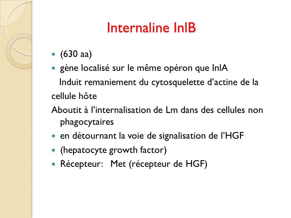 Internaline InlB (630 aa) gène localisé sur le même opéron que InlA
