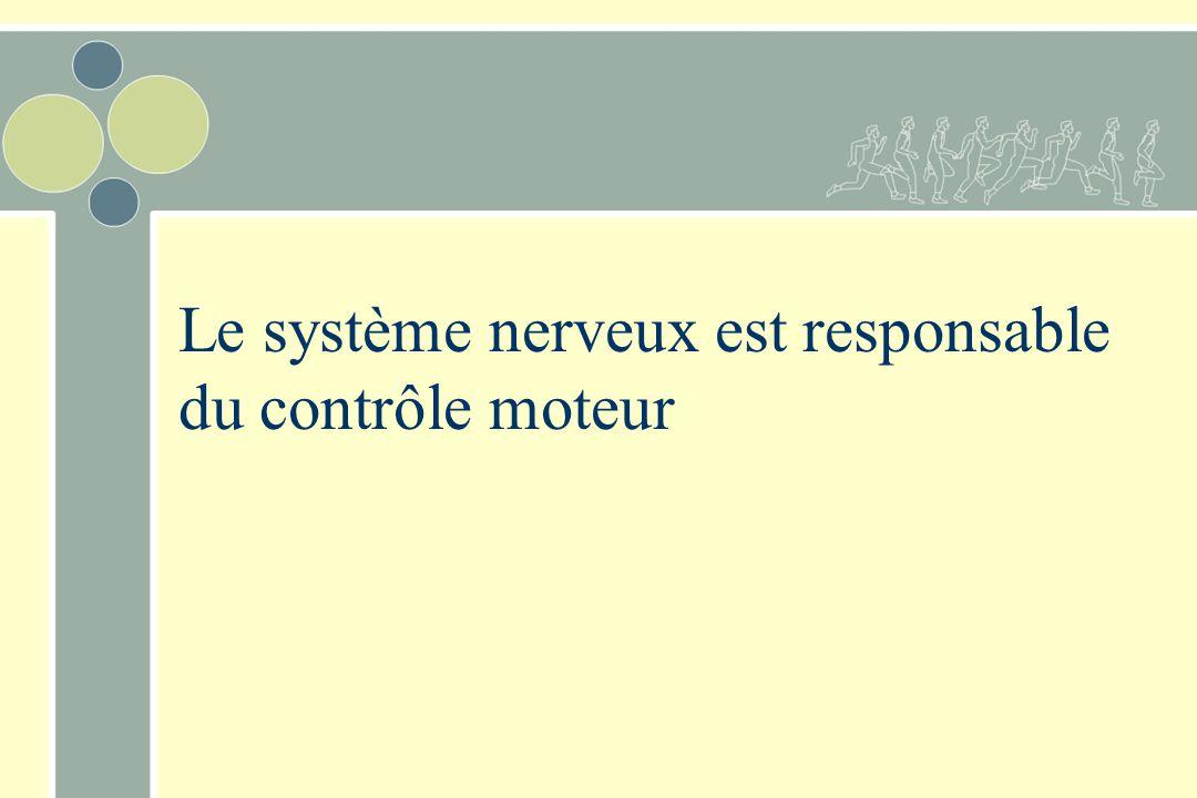 Le système nerveux est responsable du contrôle moteur