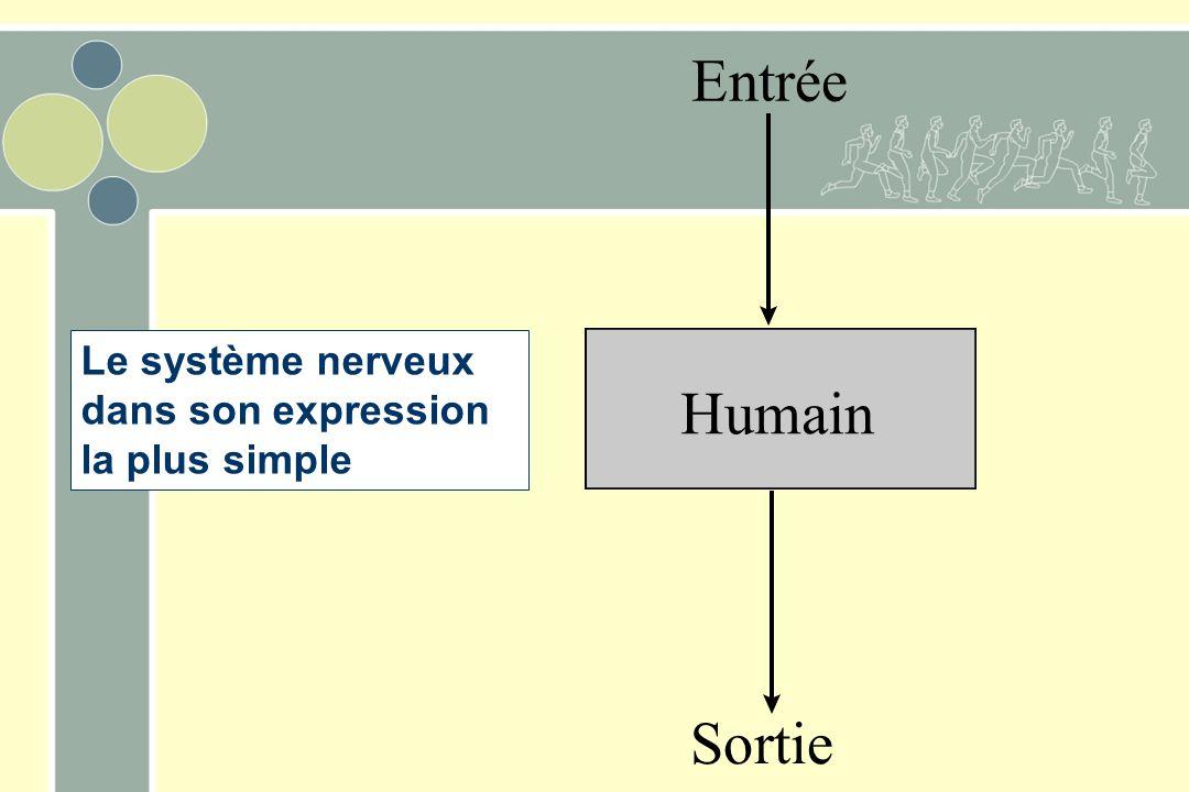 Entrée Humain Sortie Le système nerveux dans son expression