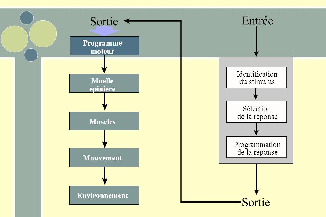 Sortie Entrée Programme moteur Identification Moelle du stimulus