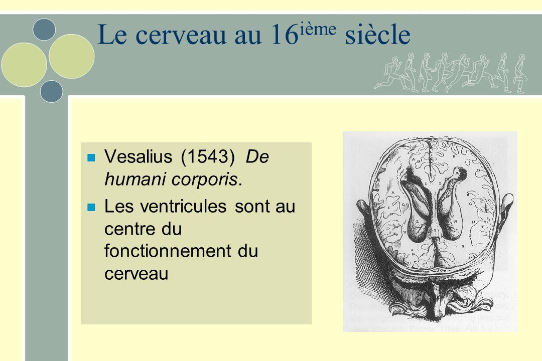 Le cerveau au 16ième siècle