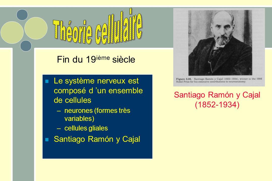 Théorie cellulaire Fin du 19ième siècle