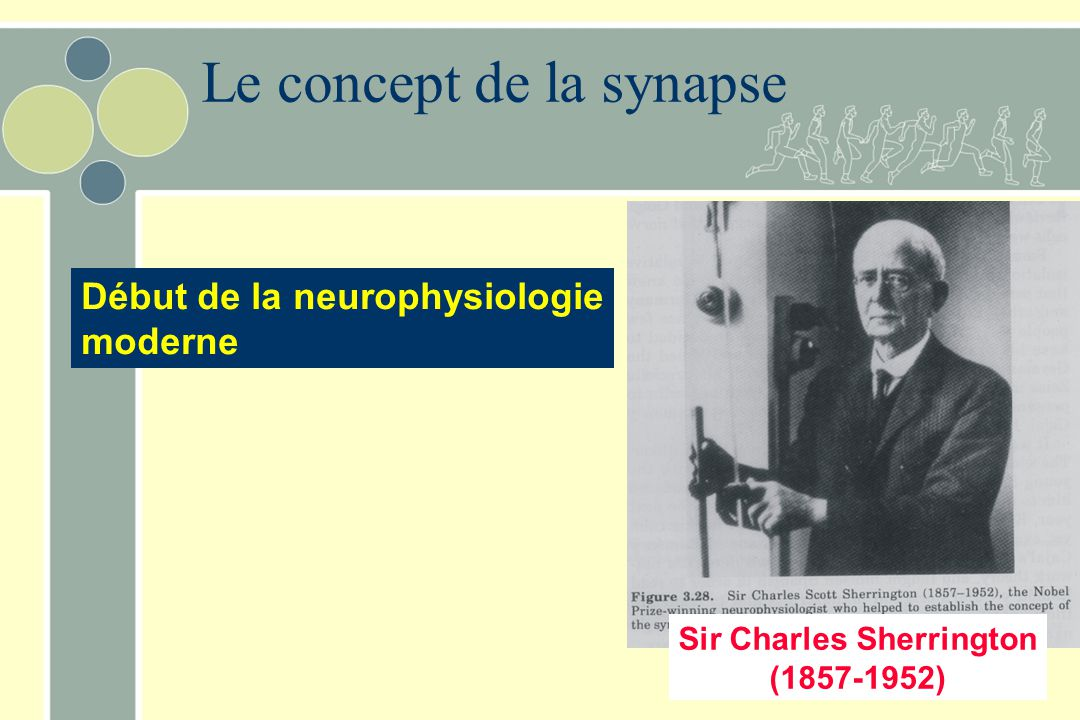 Le concept de la synapse