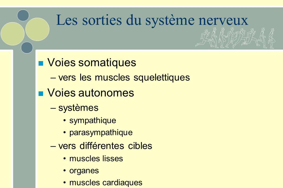 Les sorties du système nerveux