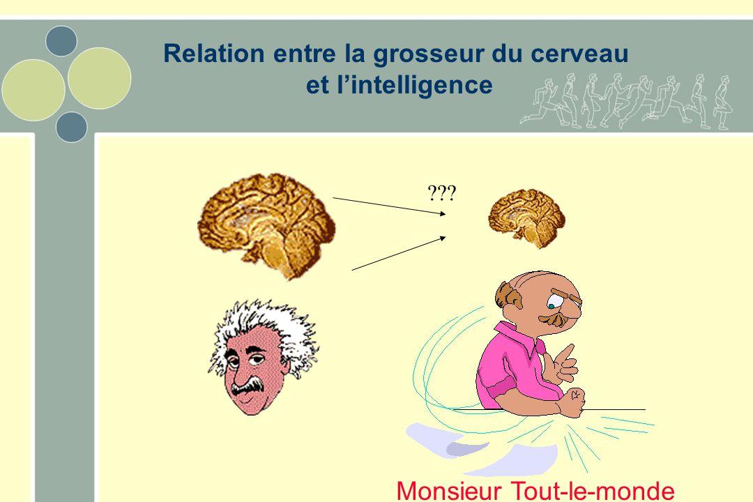 Relation entre la grosseur du cerveau