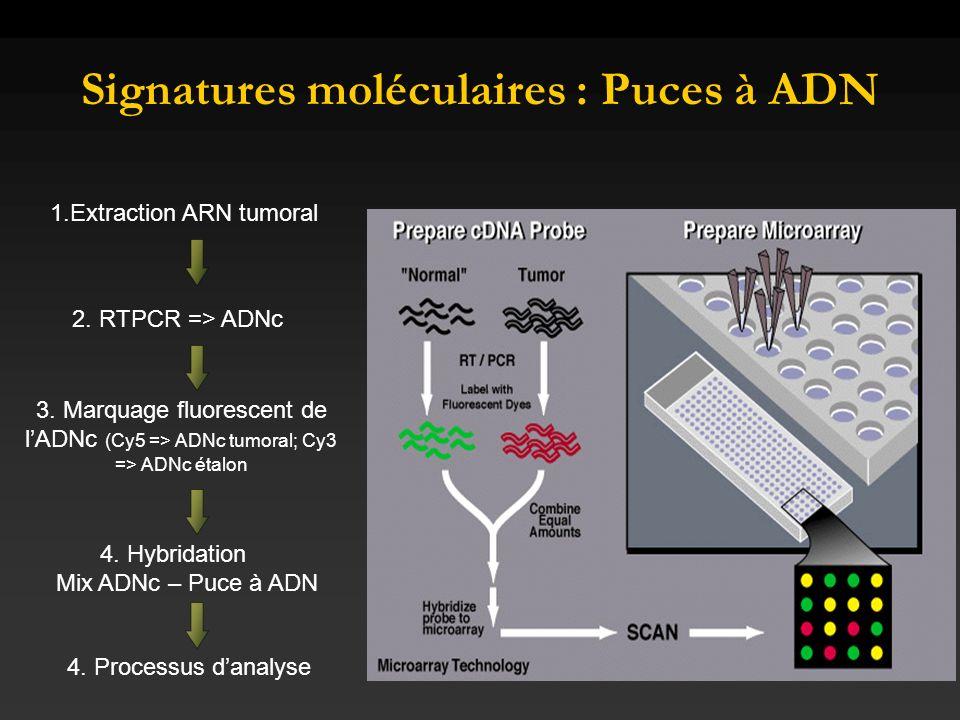 Signatures moléculaires : Puces à ADN
