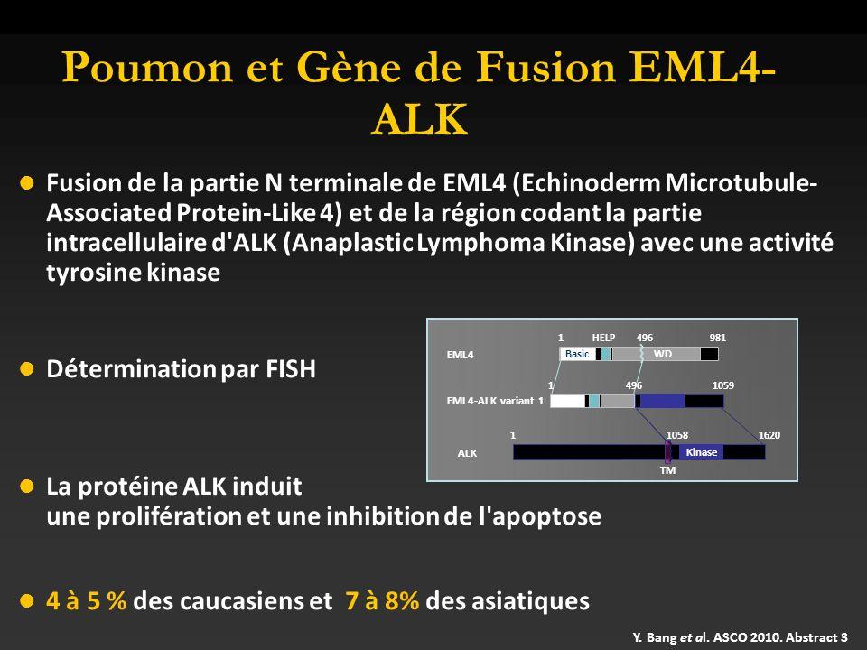 Poumon et Gène de Fusion EML4-ALK