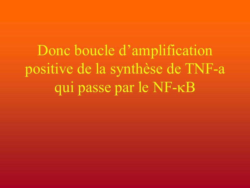 Donc boucle d'amplification positive de la synthèse de TNF-a qui passe par le NF-kB