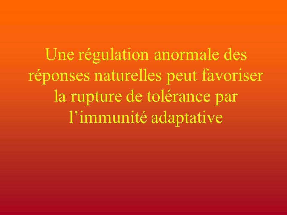Une régulation anormale des réponses naturelles peut favoriser la rupture de tolérance par l'immunité adaptative