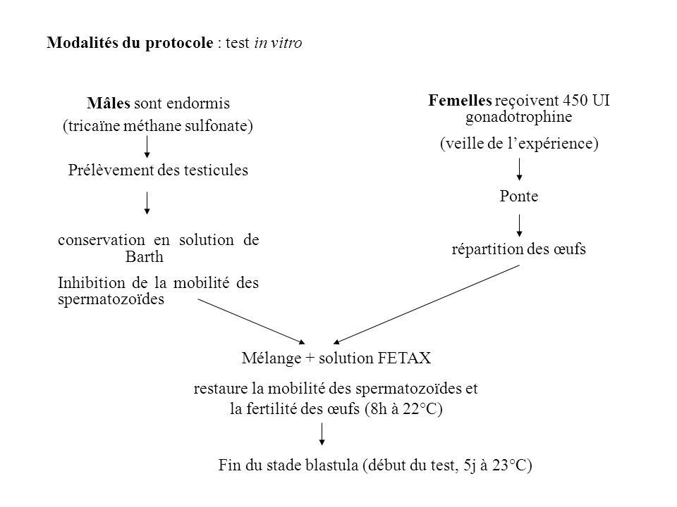 Modalités du protocole : test in vitro