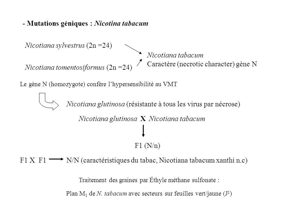 - Mutations géniques : Nicotina tabacum
