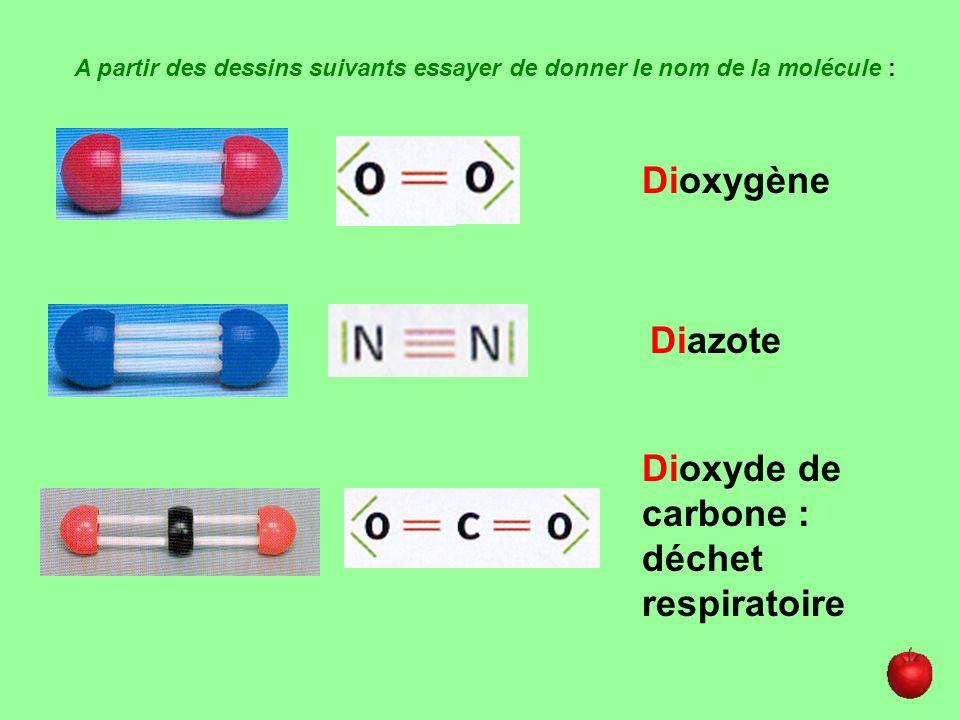 Dioxyde de carbone : déchet respiratoire