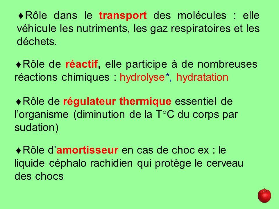 Rôle dans le transport des molécules : elle véhicule les nutriments, les gaz respiratoires et les déchets.