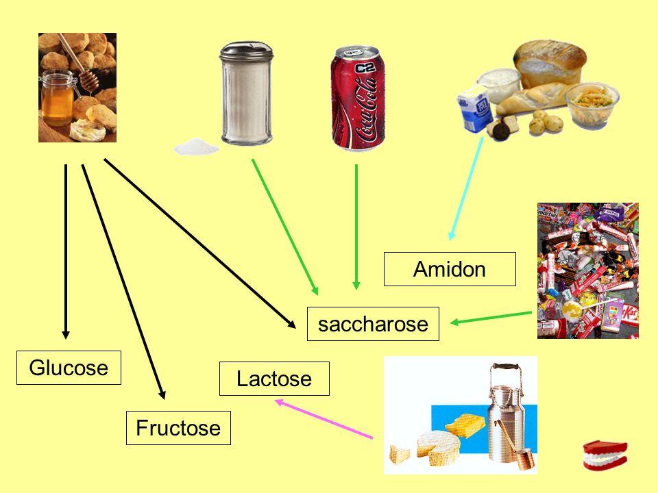 Amidon saccharose Glucose Lactose Fructose