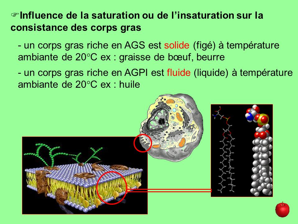 Influence de la saturation ou de l'insaturation sur la consistance des corps gras