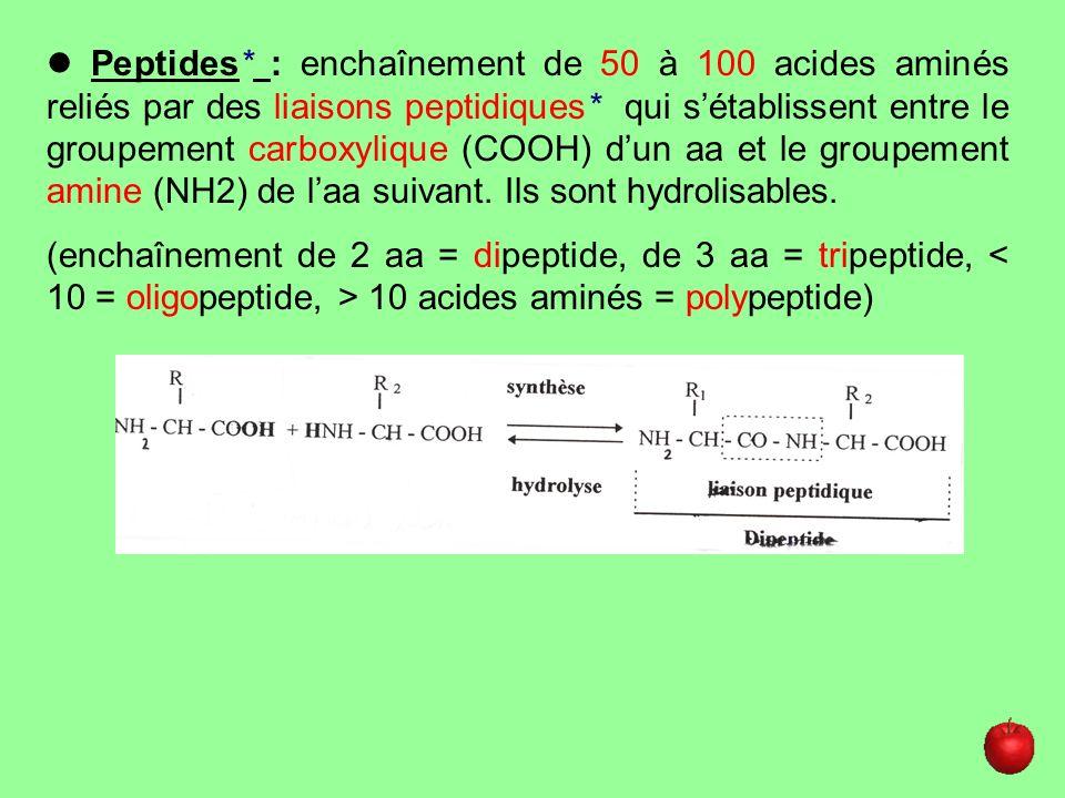  Peptides* : enchaînement de 50 à 100 acides aminés reliés par des liaisons peptidiques* qui s'établissent entre le groupement carboxylique (COOH) d'un aa et le groupement amine (NH2) de l'aa suivant. Ils sont hydrolisables.