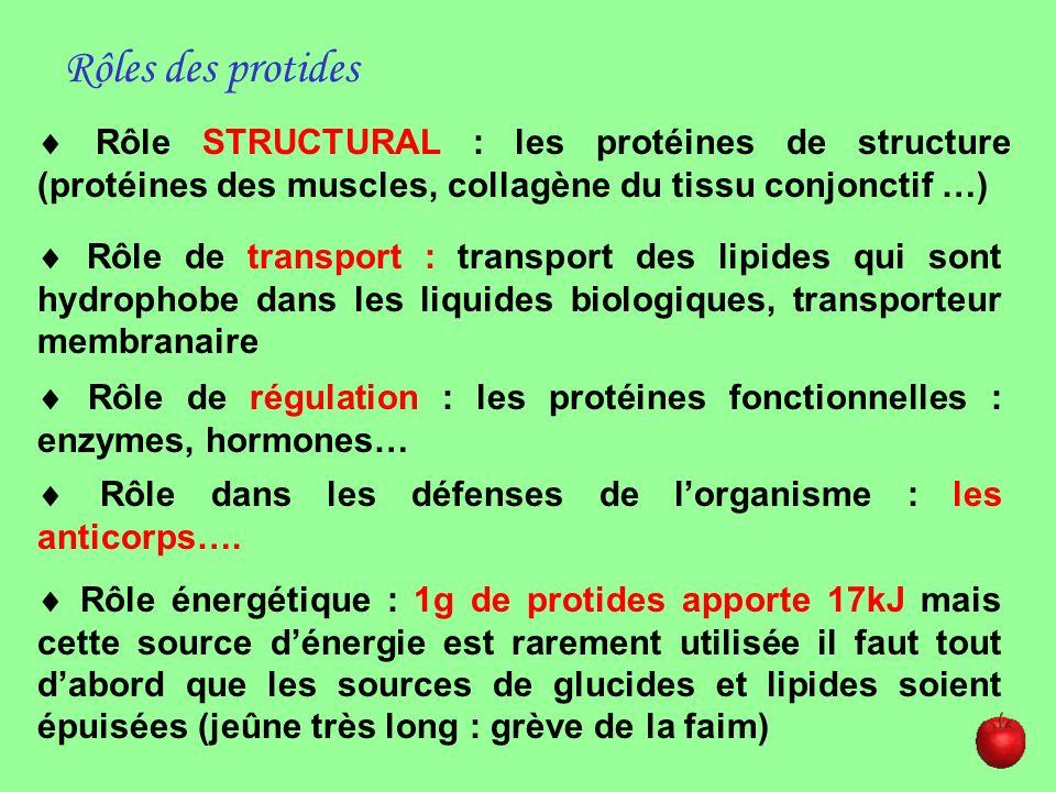 Rôles des protides Rôle STRUCTURAL : les protéines de structure (protéines des muscles, collagène du tissu conjonctif …)