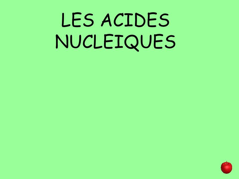 LES ACIDES NUCLEIQUES