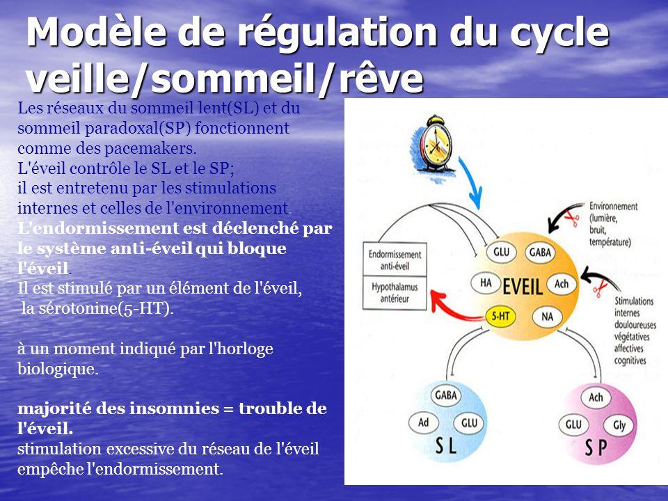 Modèle de régulation du cycle veille/sommeil/rêve