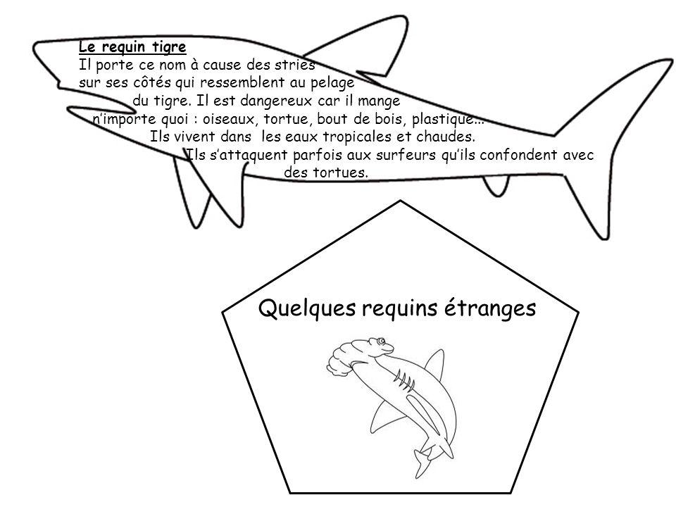 Quelques requins étranges