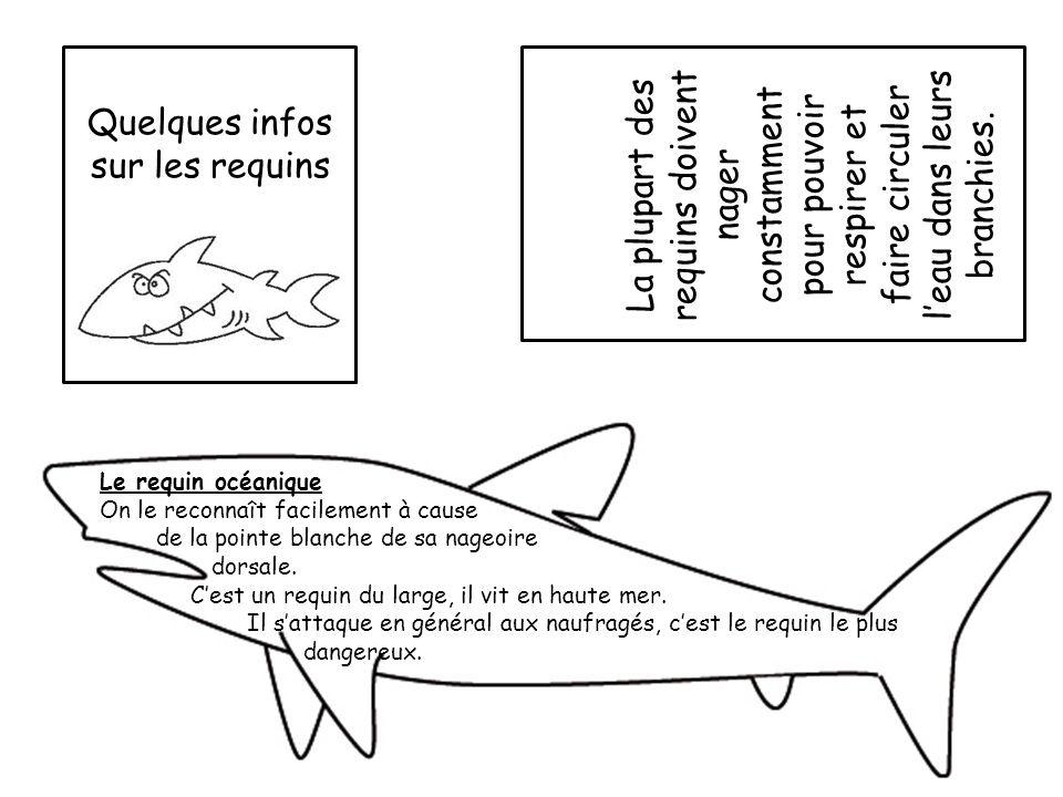 Quelques infos sur les requins