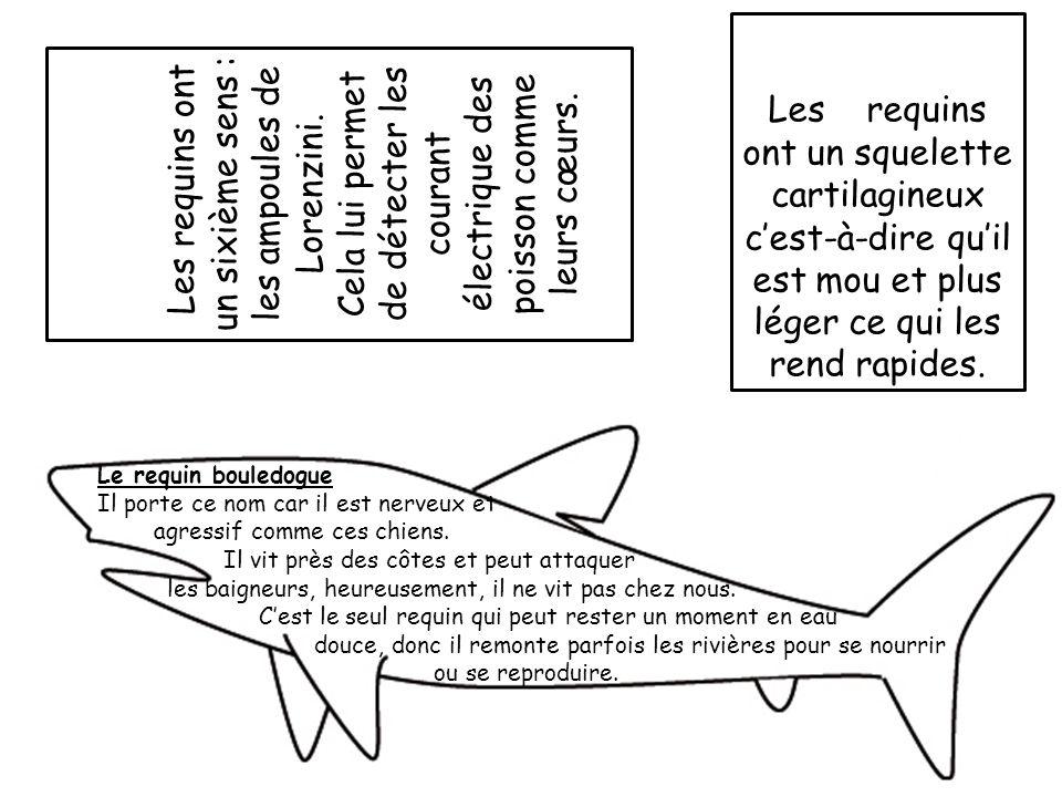 Les requins ont un sixième sens : les ampoules de Lorenzini.