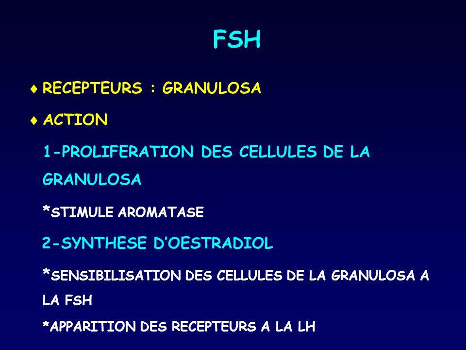 FSH RECEPTEURS : GRANULOSA ACTION