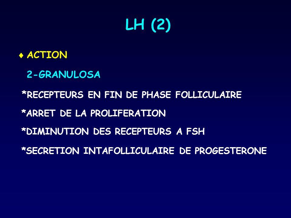 LH (2) ACTION 2-GRANULOSA *RECEPTEURS EN FIN DE PHASE FOLLICULAIRE