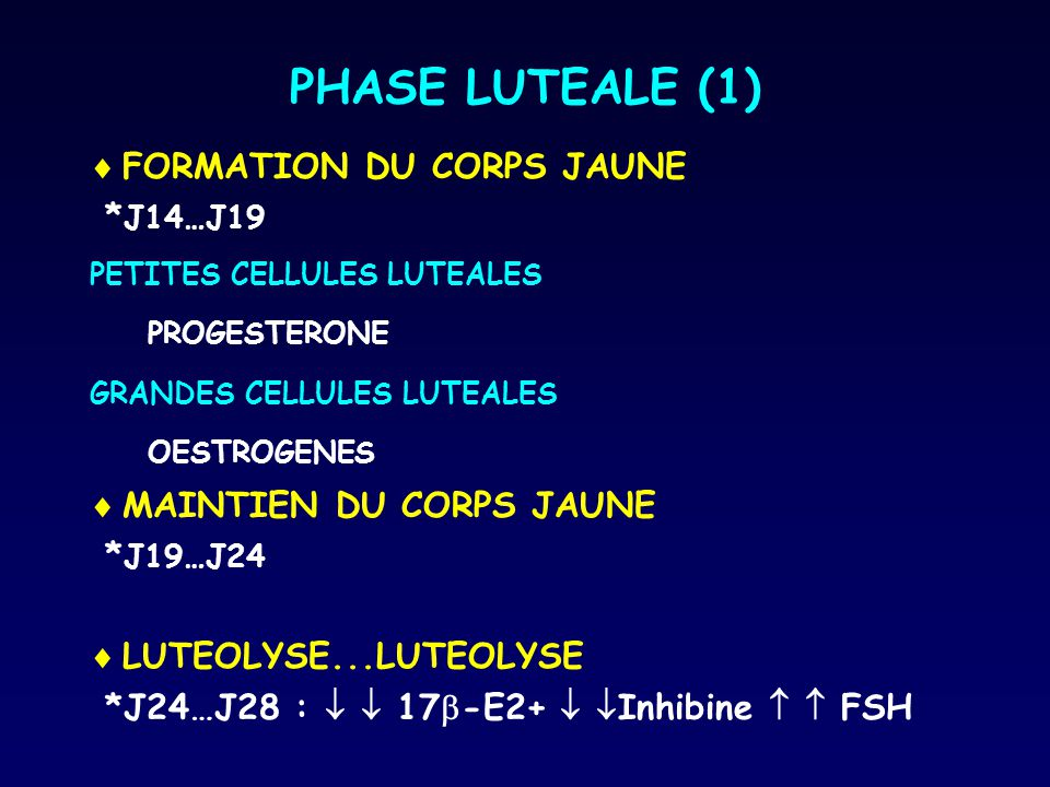 PHASE LUTEALE (1) FORMATION DU CORPS JAUNE *J14…J19