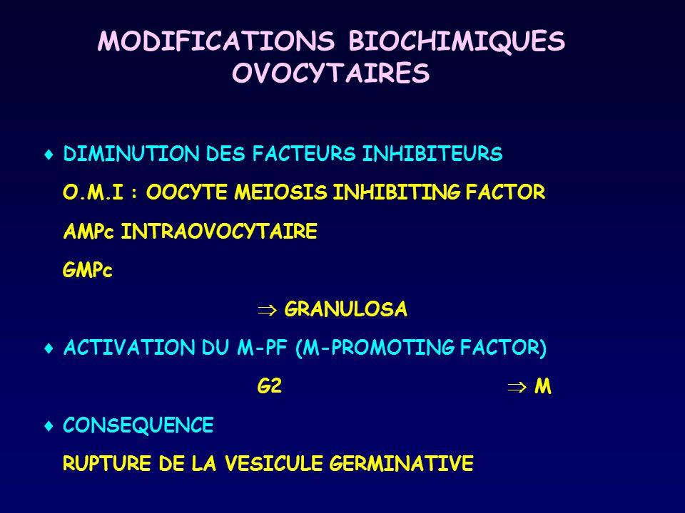 MODIFICATIONS BIOCHIMIQUES OVOCYTAIRES