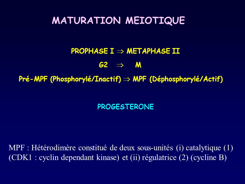 PROPHASE I  METAPHASE II