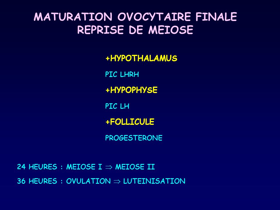 MATURATION OVOCYTAIRE FINALE REPRISE DE MEIOSE
