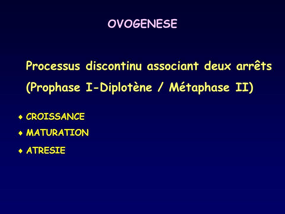 OVOGENESE Processus discontinu associant deux arrêts (Prophase I-Diplotène / Métaphase II) CROISSANCE.
