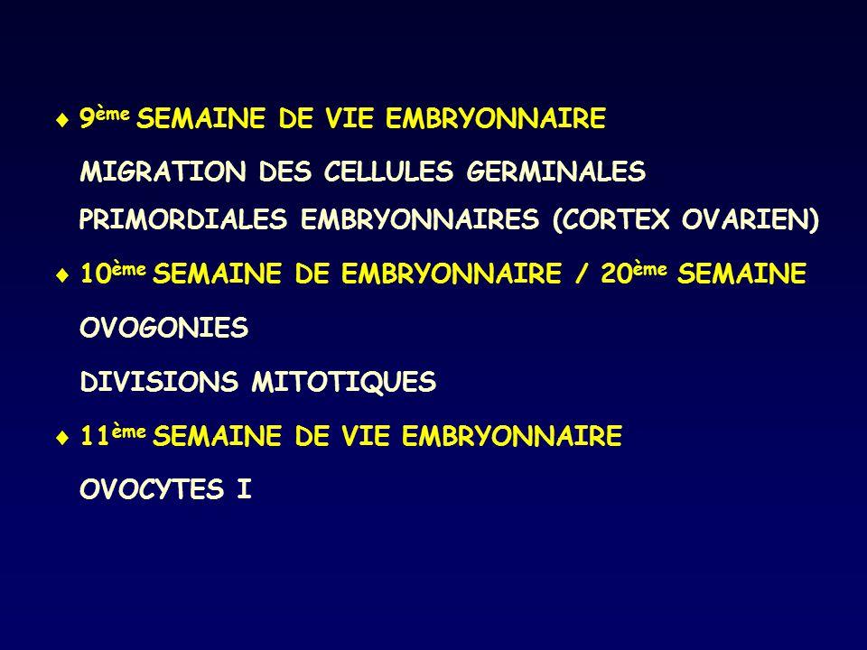 9ème SEMAINE DE VIE EMBRYONNAIRE