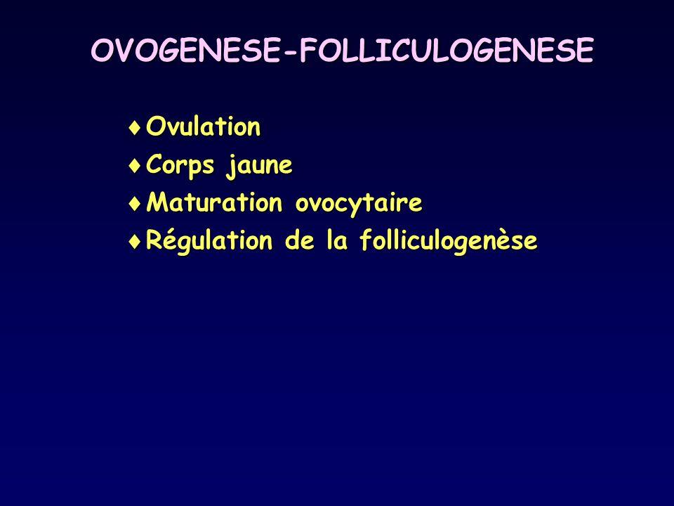 OVOGENESE-FOLLICULOGENESE