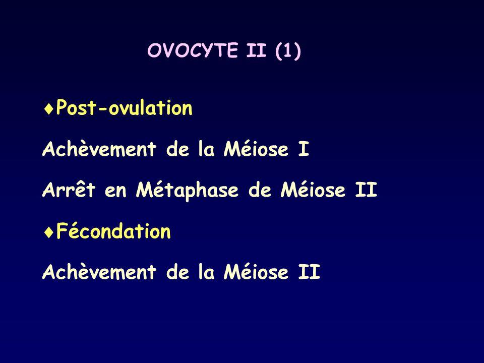 Achèvement de la Méiose I Arrêt en Métaphase de Méiose II Fécondation