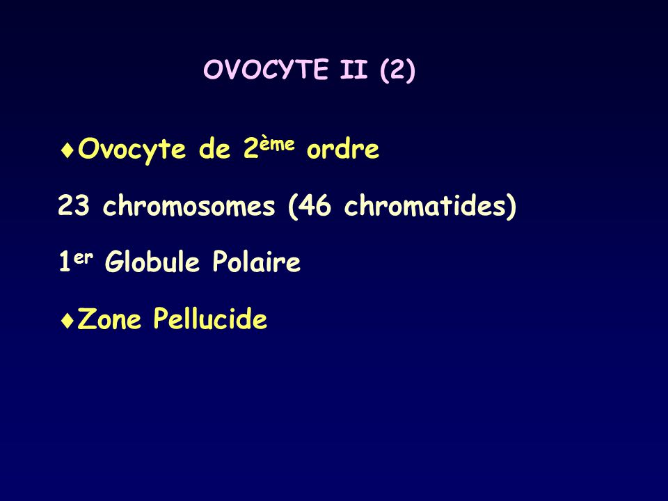 23 chromosomes (46 chromatides) 1er Globule Polaire Zone Pellucide