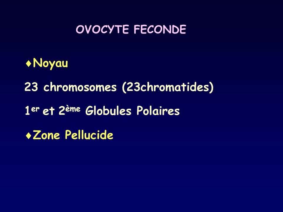 23 chromosomes (23chromatides) 1er et 2ème Globules Polaires