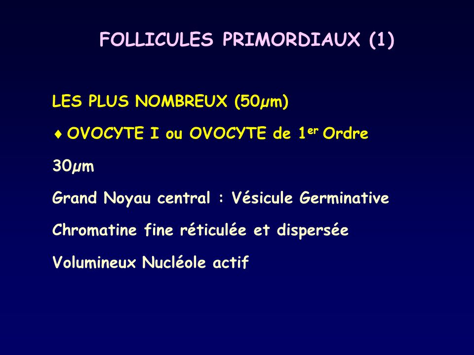 FOLLICULES PRIMORDIAUX (1)