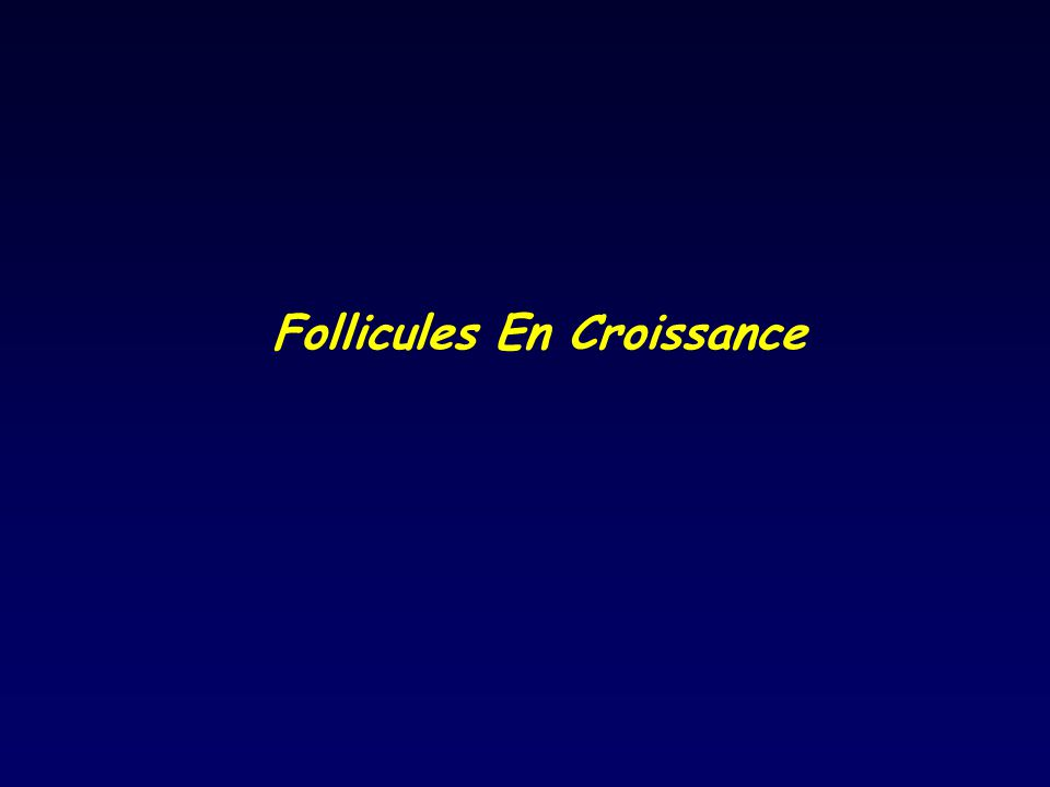 Follicules En Croissance