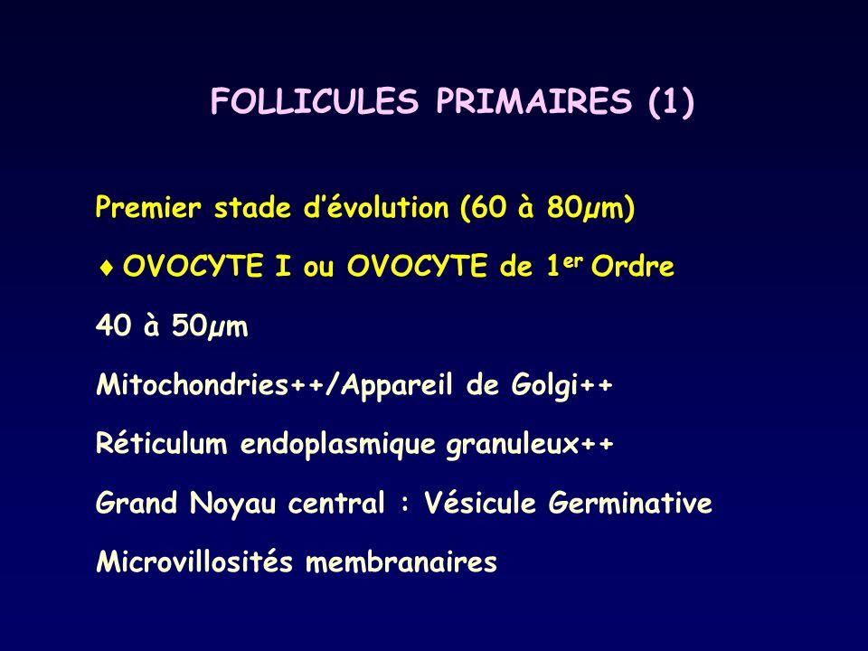 FOLLICULES PRIMAIRES (1)