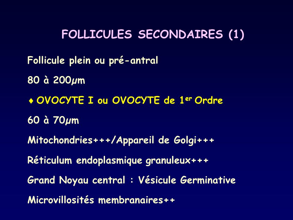 FOLLICULES SECONDAIRES (1)