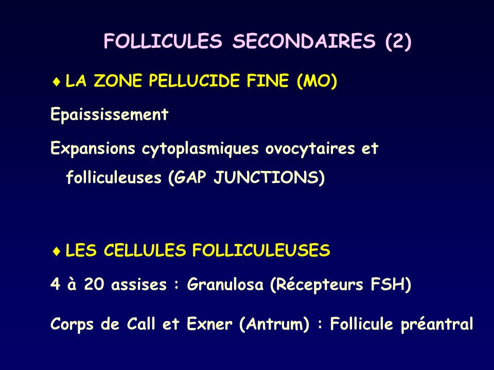 FOLLICULES SECONDAIRES (2)