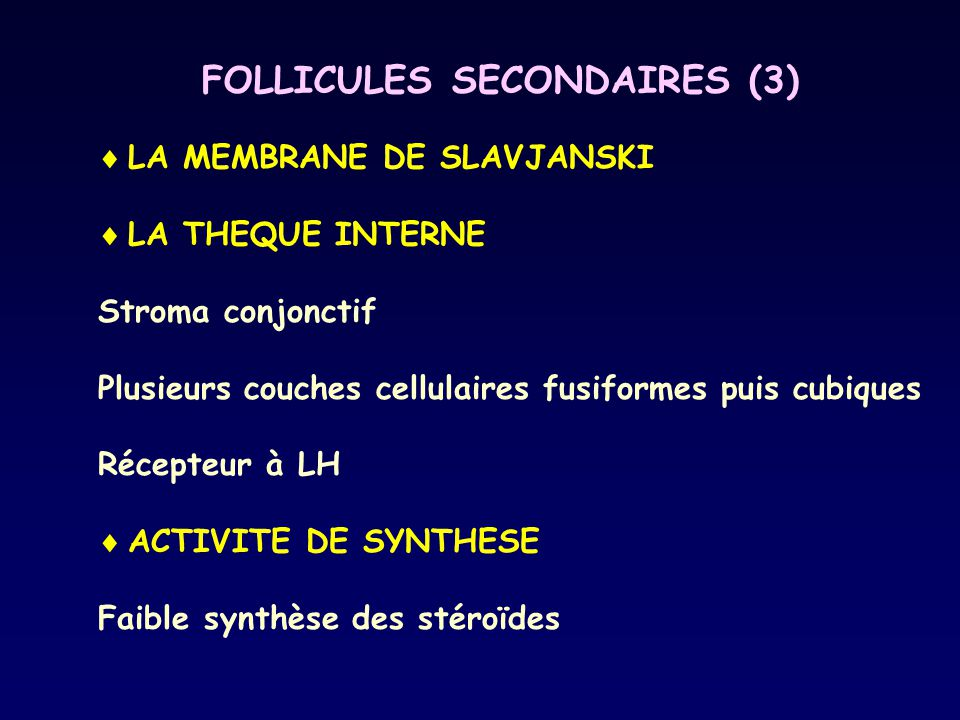 FOLLICULES SECONDAIRES (3)