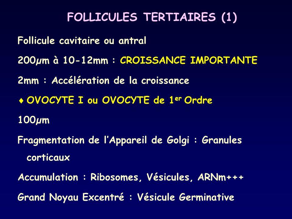 FOLLICULES TERTIAIRES (1)